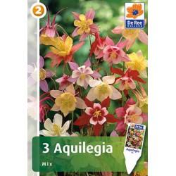 AQUILEGIA